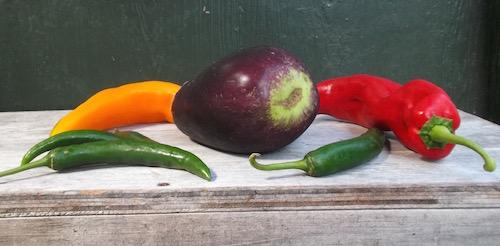 Easter eggplants