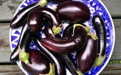 Appreciating eggplant