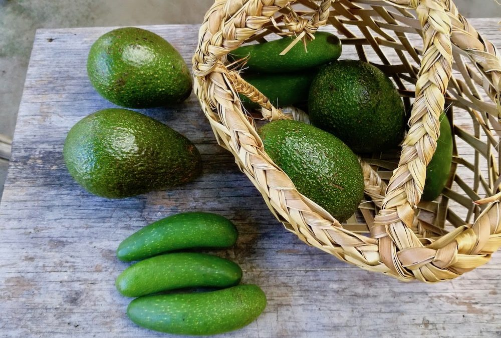 avocados with basket