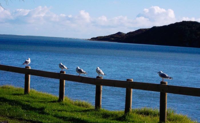 seagulls at harbouir