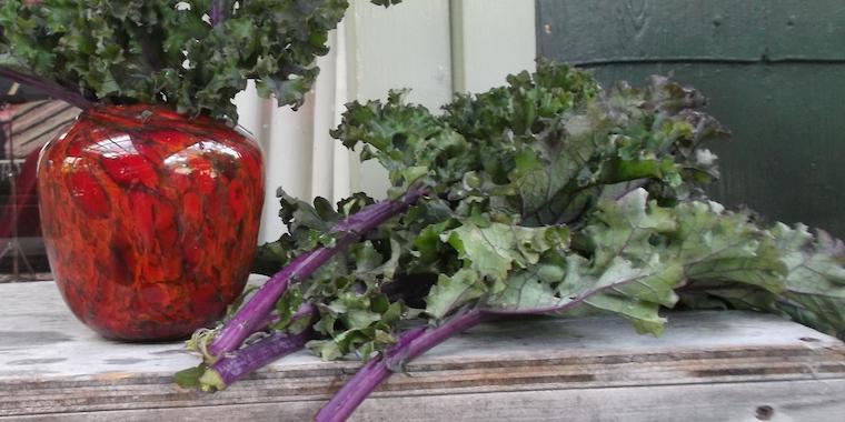 O Kale!  Enjoy this virtuous vegetable