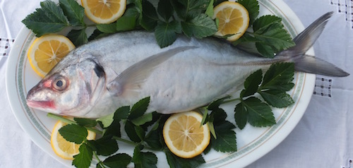 Raglan Fish: The local catch